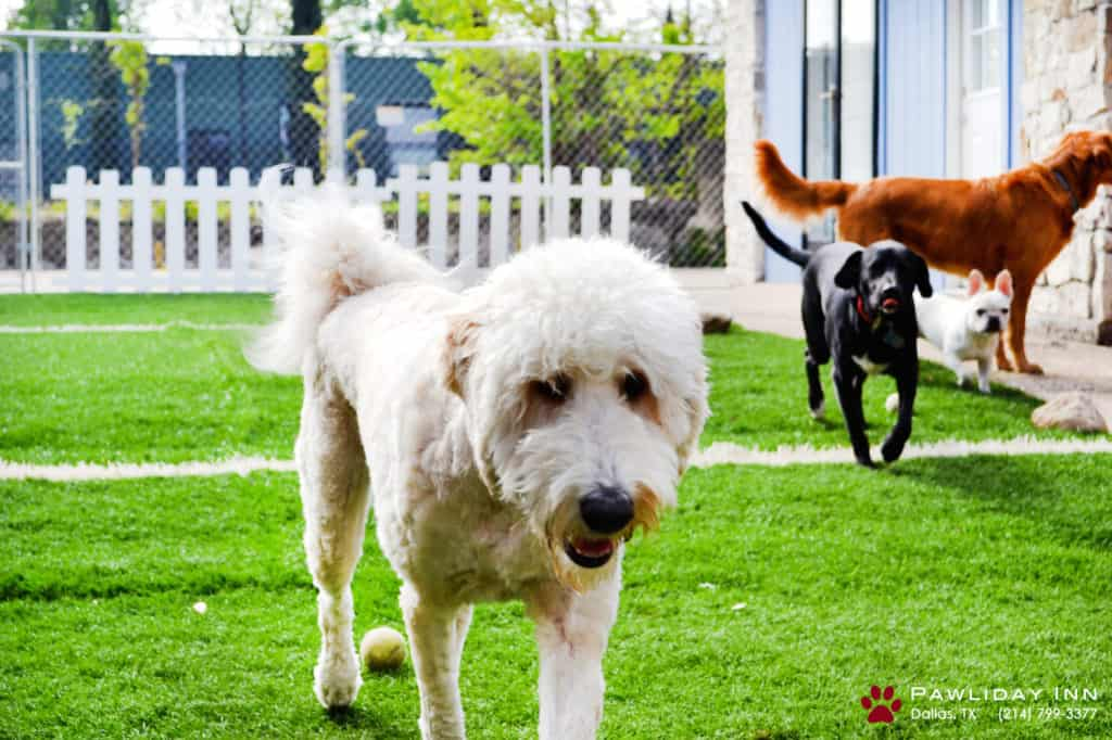 Advantages Of Enrolling To A Dog Daycare Center