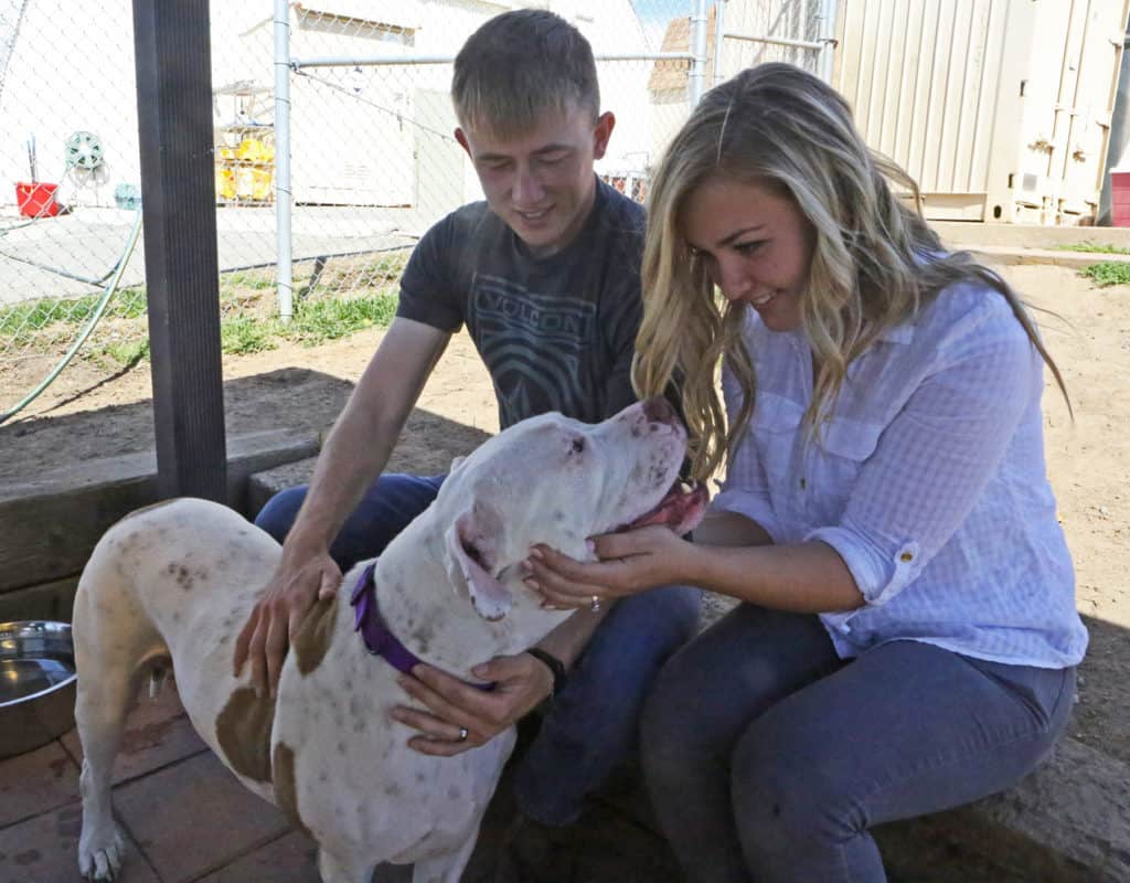 Reasons For You To Consider The Dogs For Adoption In Shelters
