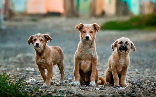 6 Family Friendly Dog Breeds
