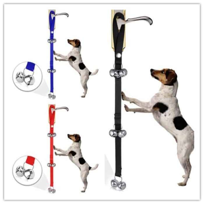 Names For A Girl Dog And The Best Doorbell Straps For Them