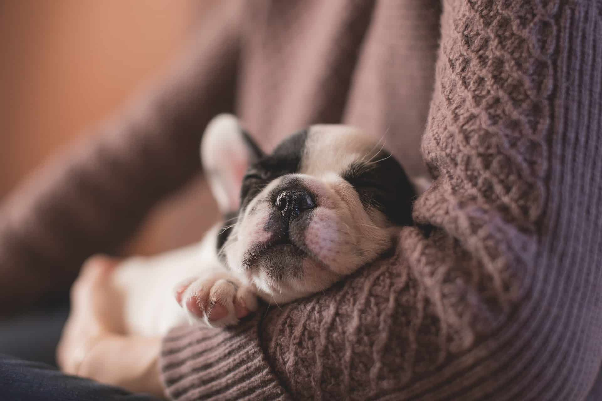 Dog Care Tips: How To Adopt And Care Dogs