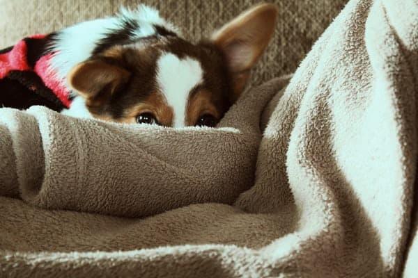 Dog Blanket Pet's Favourite