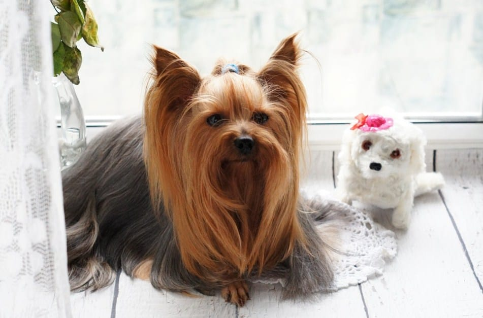 Essential Pet Grooming Tips Just For Your Pet