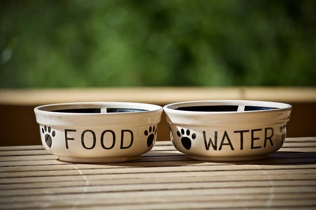 Dog Bowls: What Is The Safest Material For Dog Bowls