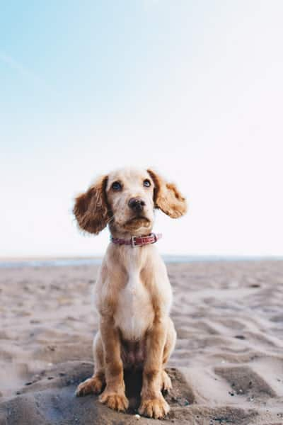 What Is The Basic Training For Dog