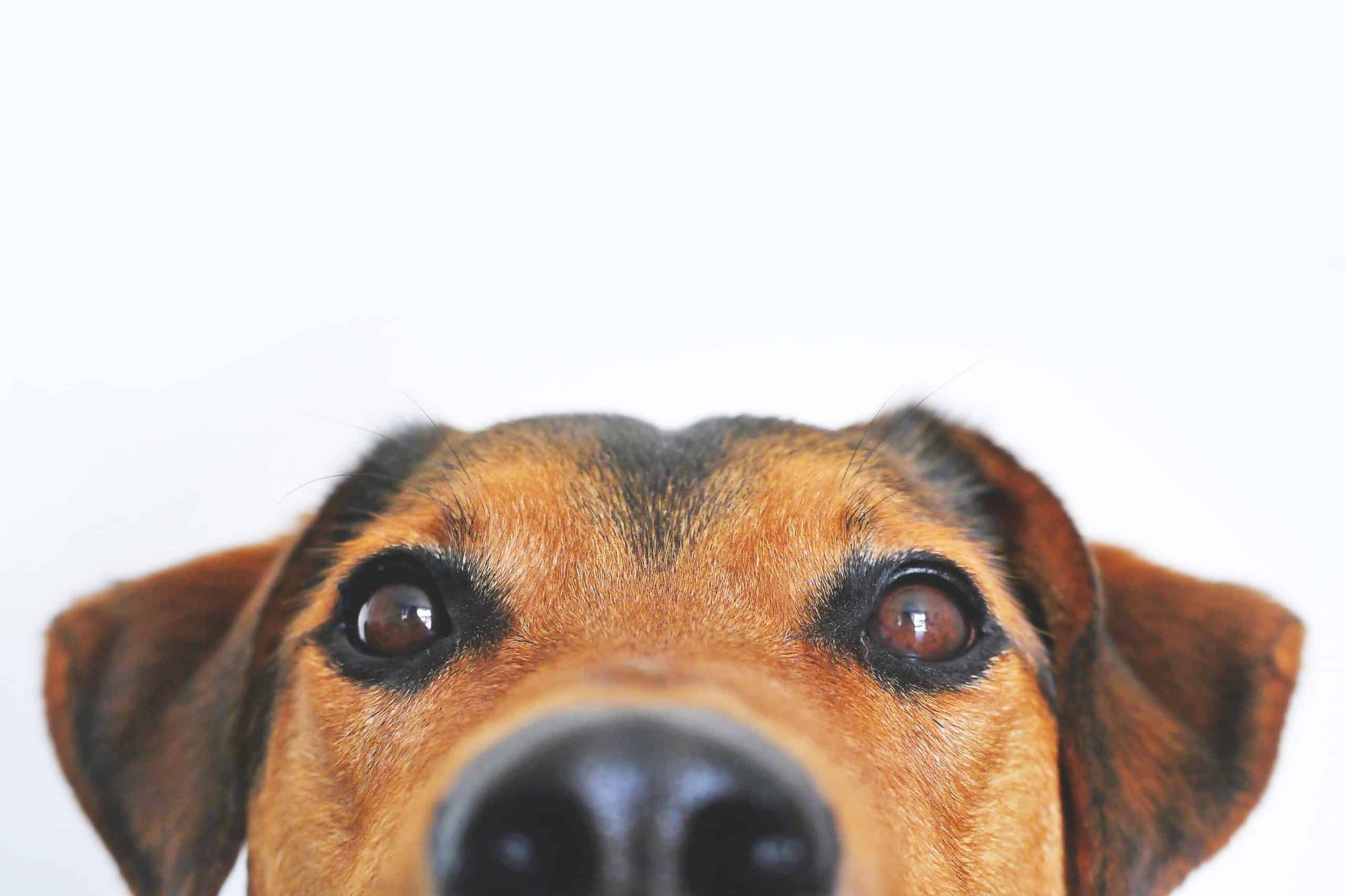 How Long Does A Dog Lives Last?