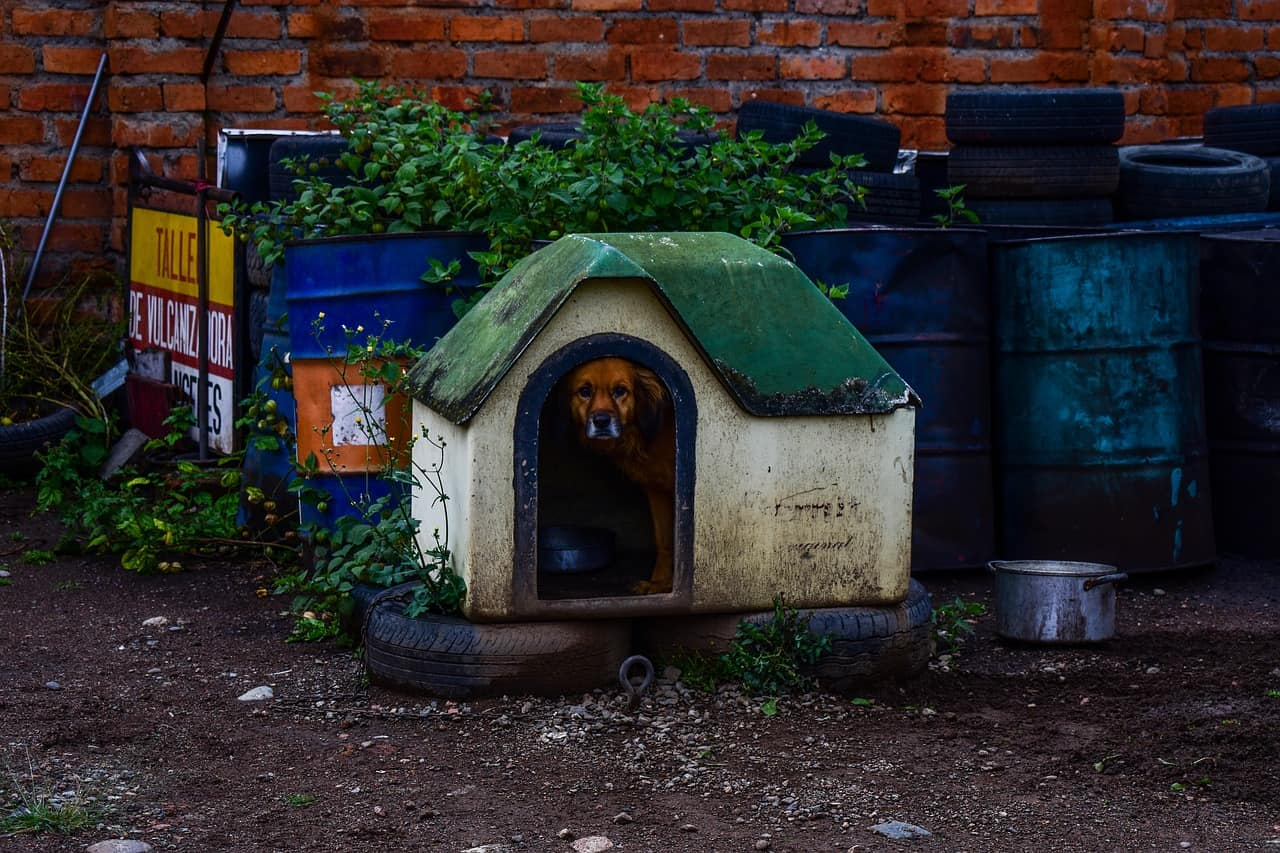 Tips for Finding the Best Dog House For Your Dog