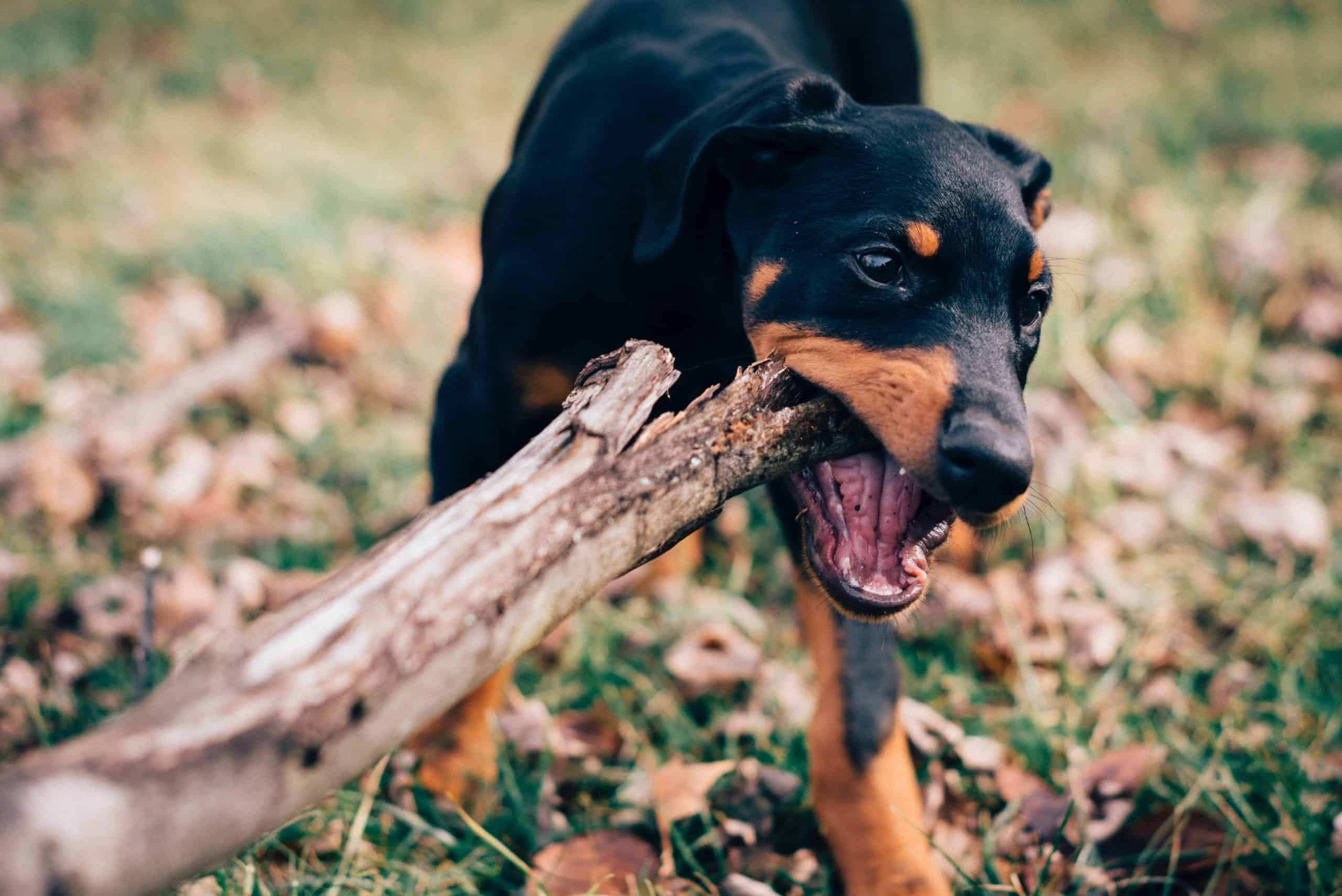 Facts About Dog Bite Law And Its Application In Criminal Law