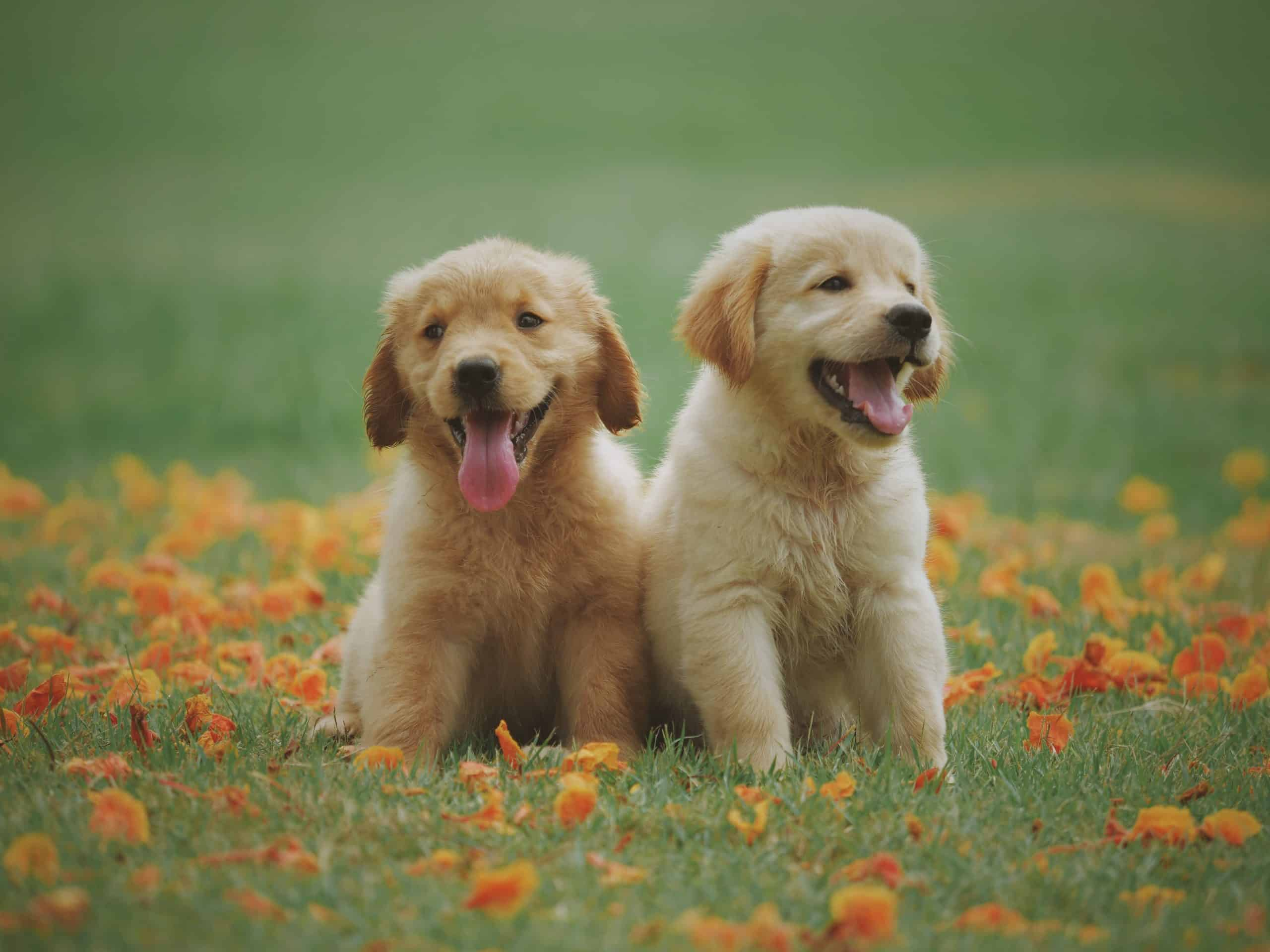 Tips To Raise Dogs For Fun And Entertainment