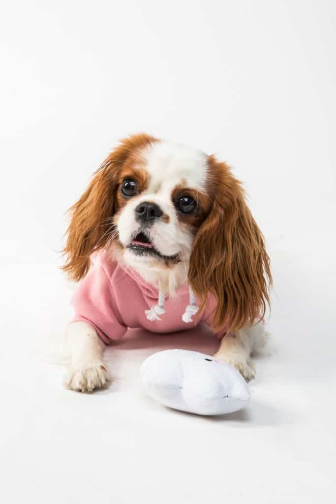 Cute Clothes For Puppies That Are Also Functional