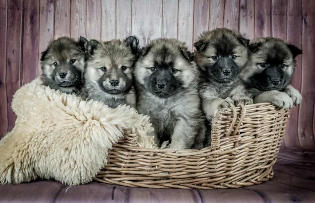 Puppies Care Tips - Is Your Puppy Ready For New Family?