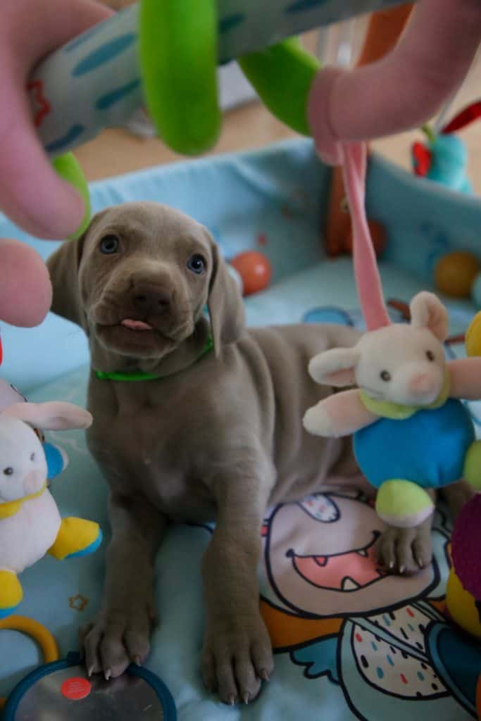 Cute Puppy Breeds And Tips For Taking care Them
