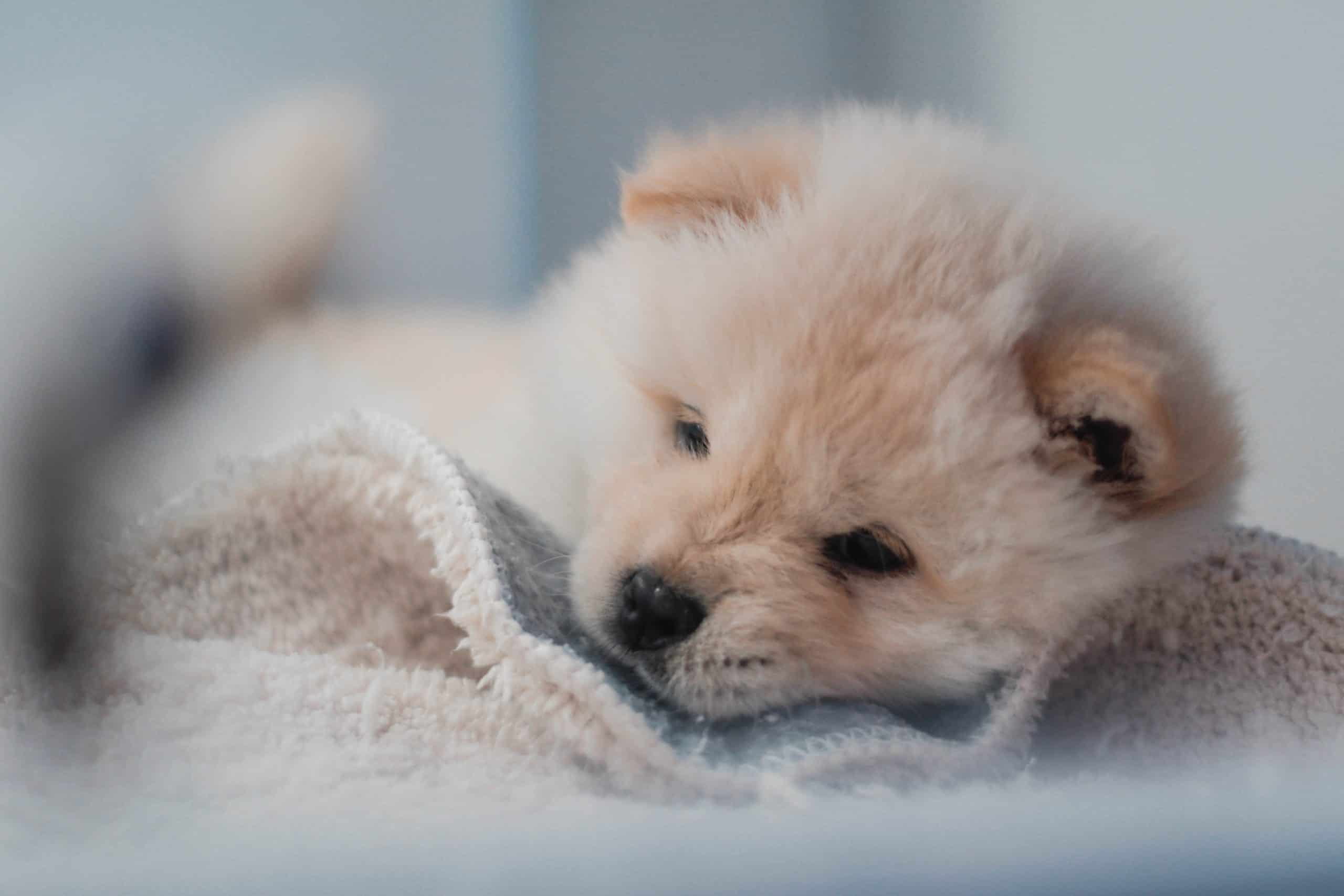 6 Week Old Puppy Care: How to Take Care of Your Puppy?