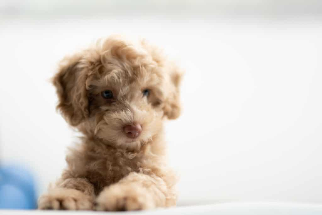 Know The Best Puppies For Kids