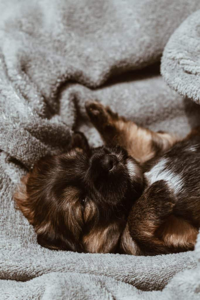 Know The Benefits Of Puppy Feeding