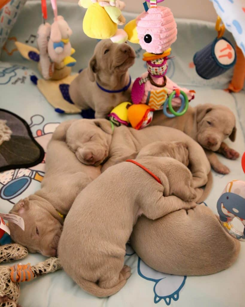 How To Choose The Best Puppy Starter Food