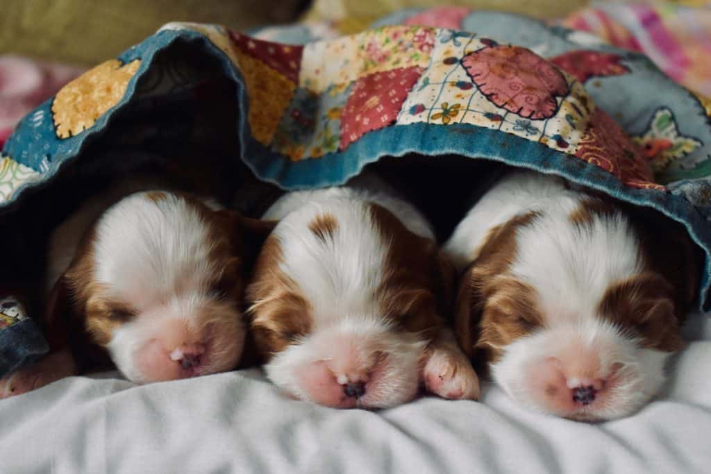 Steps Of How To Care For Newborn Puppies