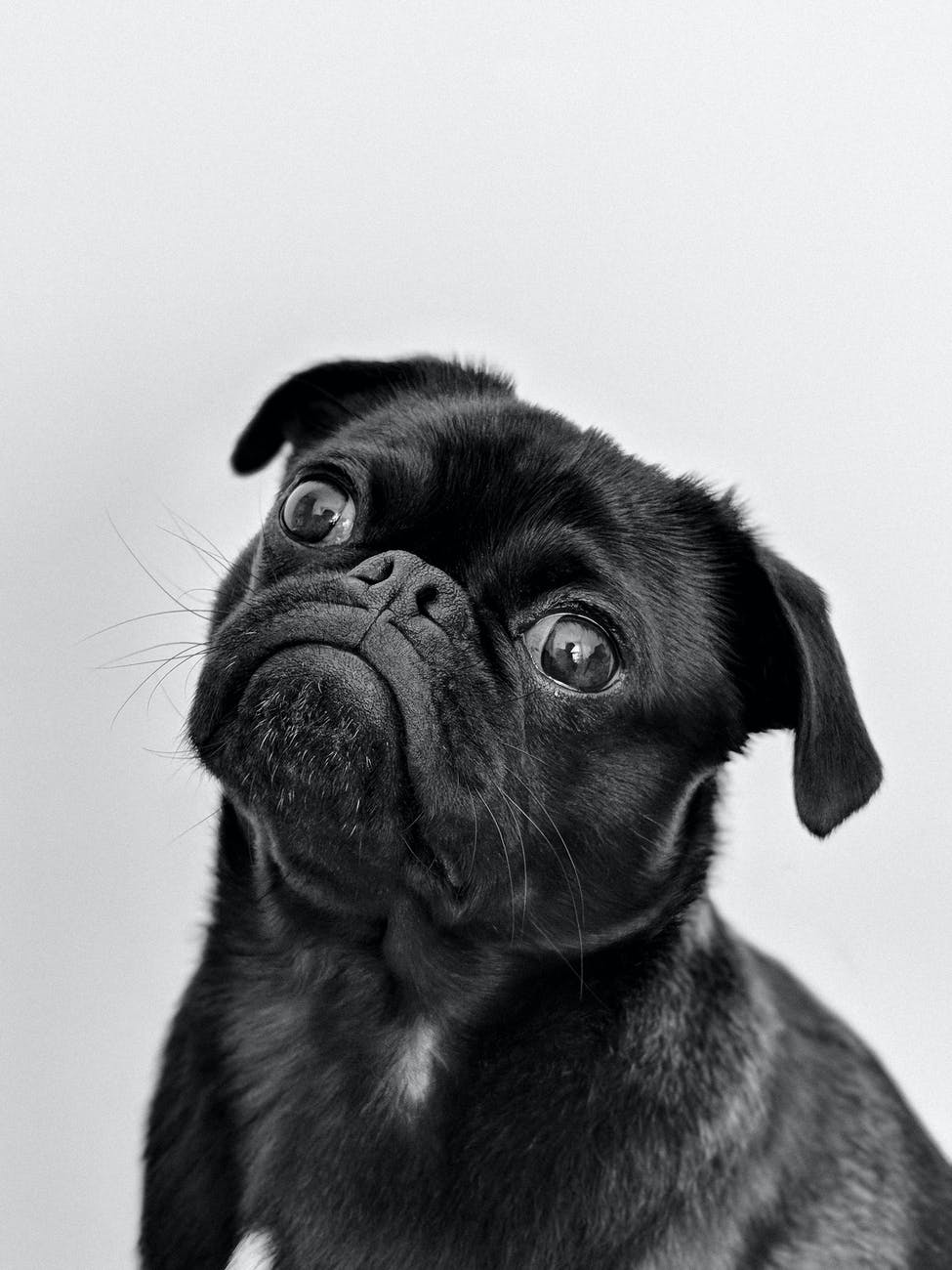 Tips for puppy training