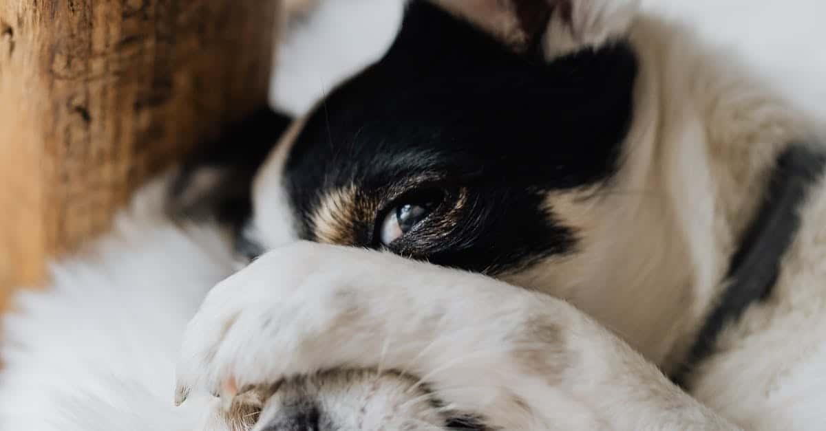 Orphaned Newborn Puppy Care