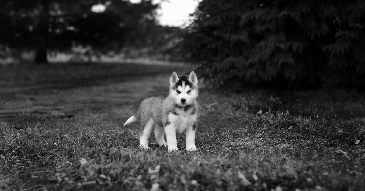 husky puppy tips