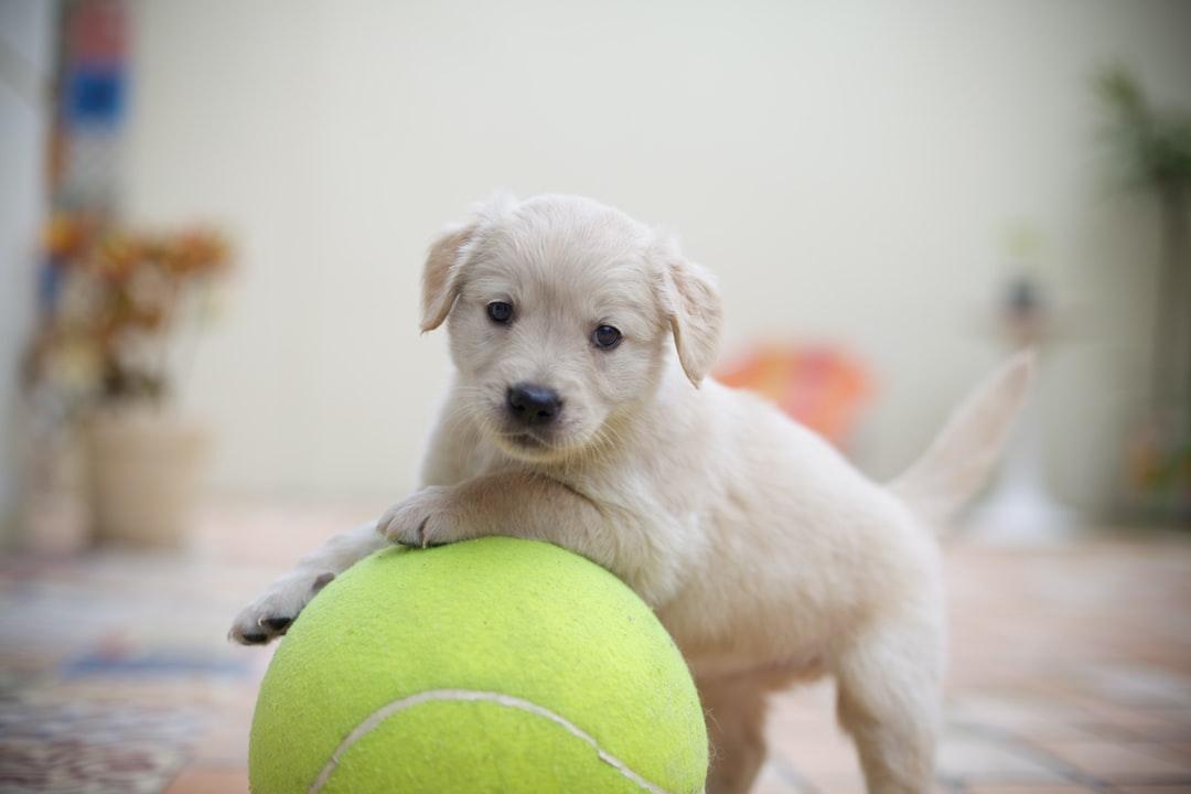puppy housebreaking tips