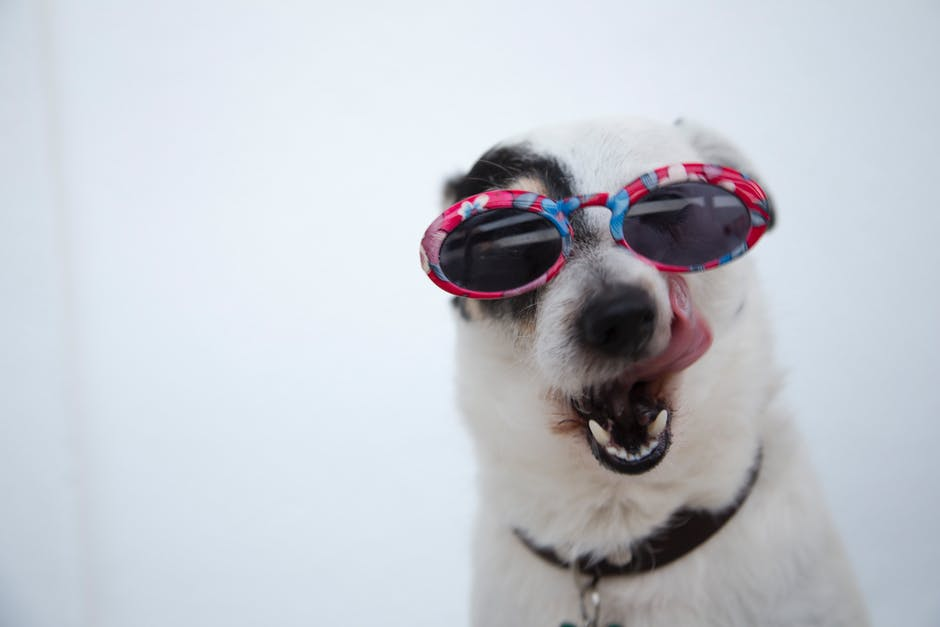 A dog wearing sunglasses