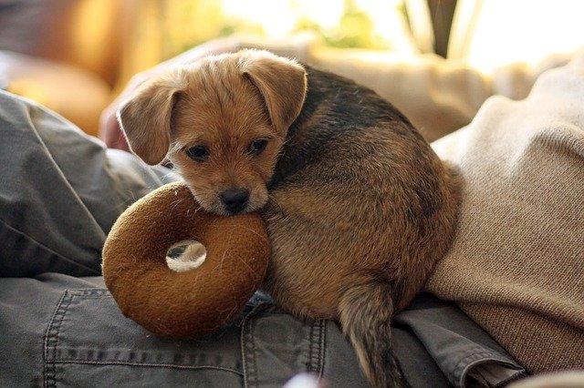 puppy dog pals toys walmart