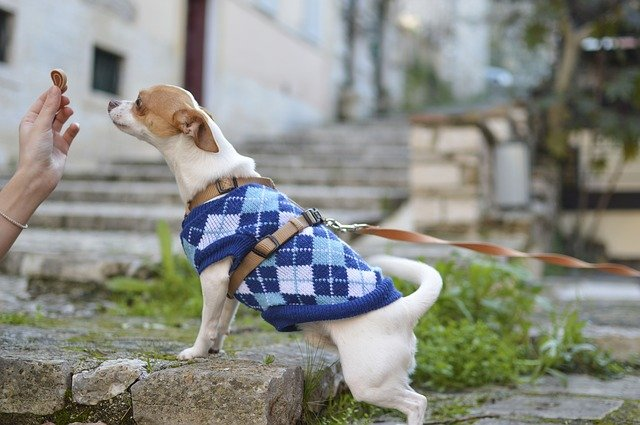 puppy clothes and accessories