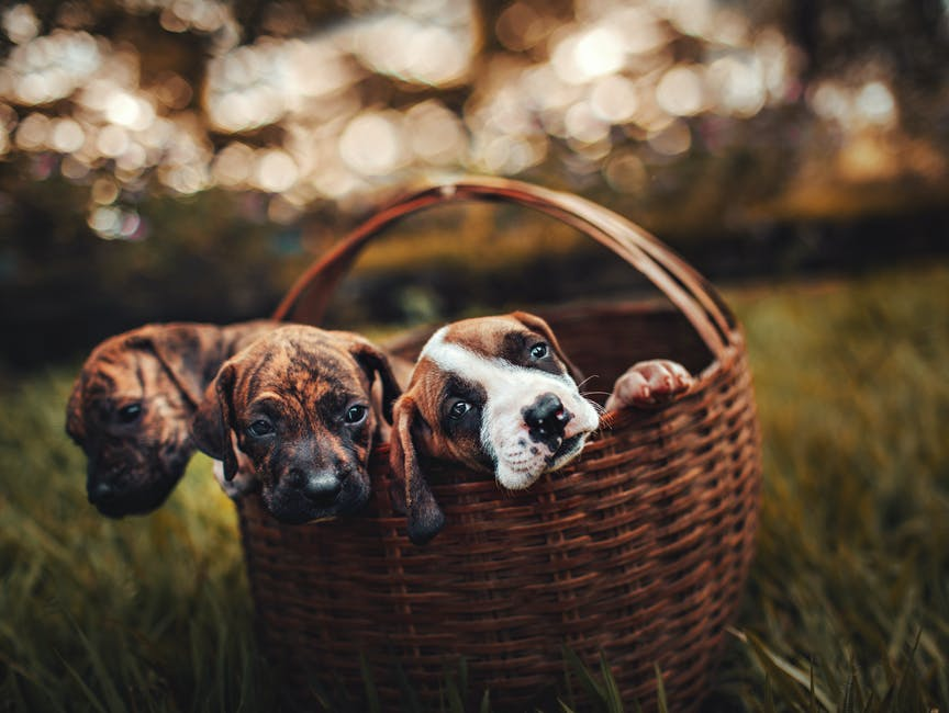 newborn puppy care with mother