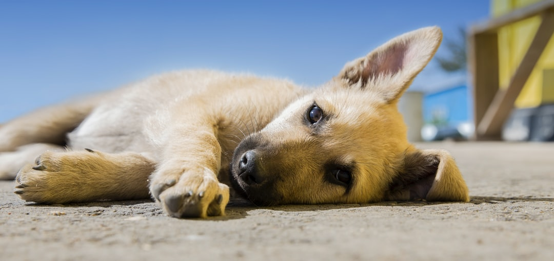 A dog lying on the ground