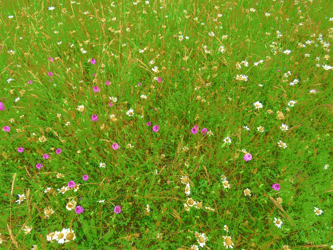 A pink flower is standing in the grass