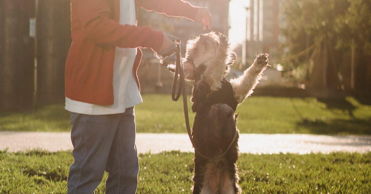 training pitbull puppy tips