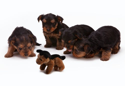 A group of stuffed animals sitting next to a dog