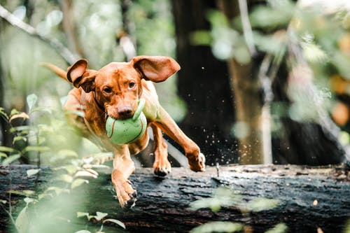 A dog with a frisbee in its mouth