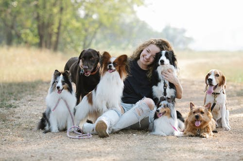 A group of brown and white dog