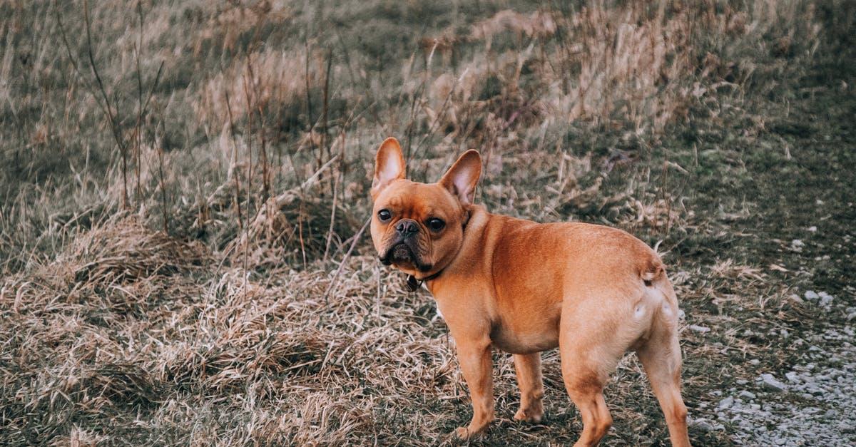 bulldog puppy training tips