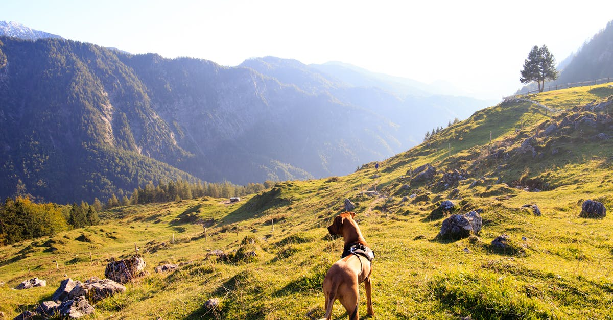 A horse with a mountain in the background